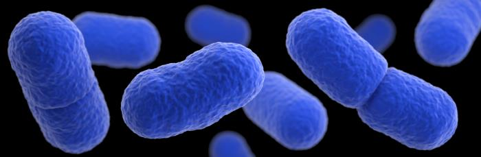 Listeria Bacteria Illustration CDC & James Archer.jpg