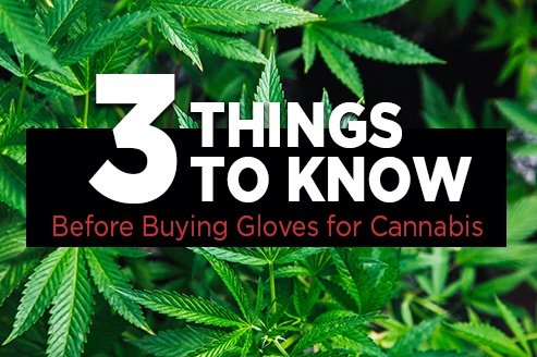 Cannabis Industry: 3 Facts to Consider Before Buying Gloves