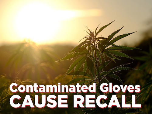 Toxic Chemical in Gloves Responsible for Cannabis Recall